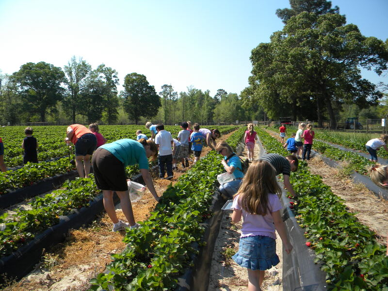 strawberry learning outdoor classroom